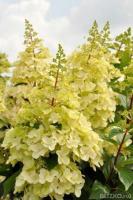 Цветы многолетние купить в екатеринбурге