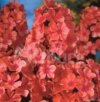 Купить многолетние цветы в екатеринбурге доставка цветов в г ярославле из москвы
